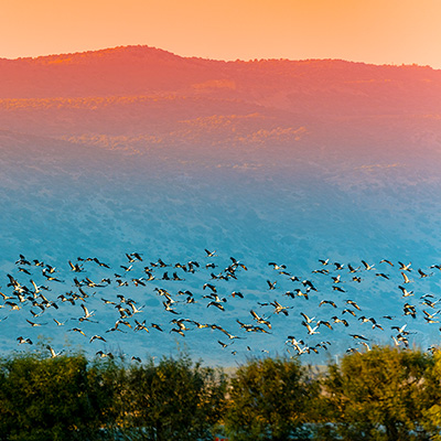 JNF helps develop areas like the Hula Valley Bird Sanctuary
